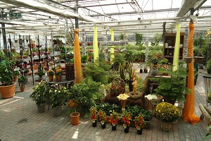 Tuincentrum Eygelshoven